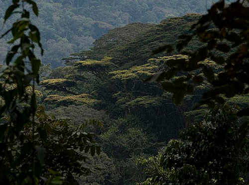 nyungwe forest tours